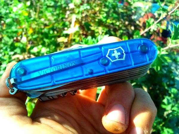 Saphire blue swisschamp