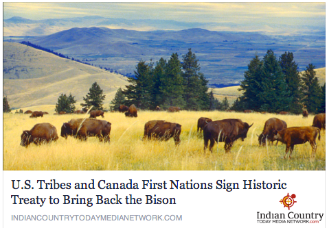 Bison Coming Home
