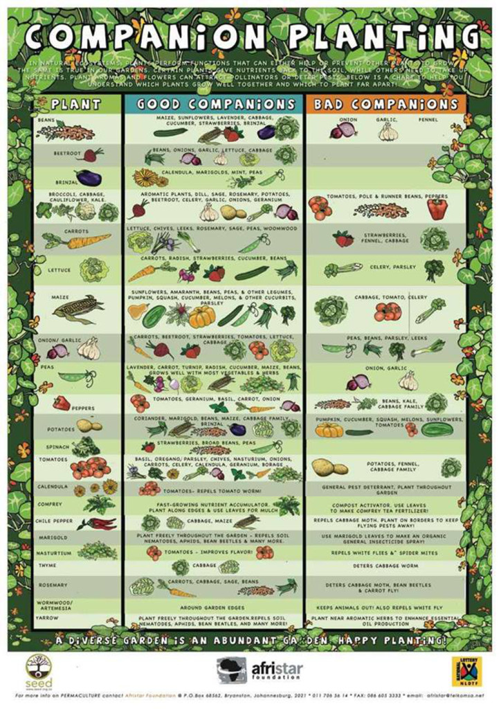 Homesteading starter kits heirloom seeds pre packed w companion plant seeds educational - Companion planting ...