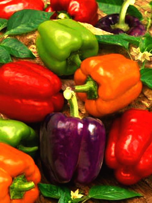 Heirloom Peppers