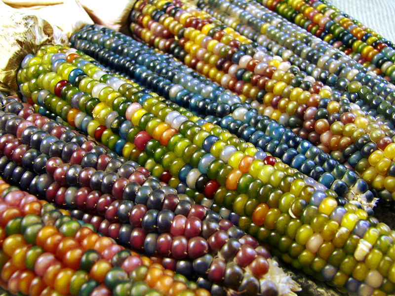 Glass gem swee corn